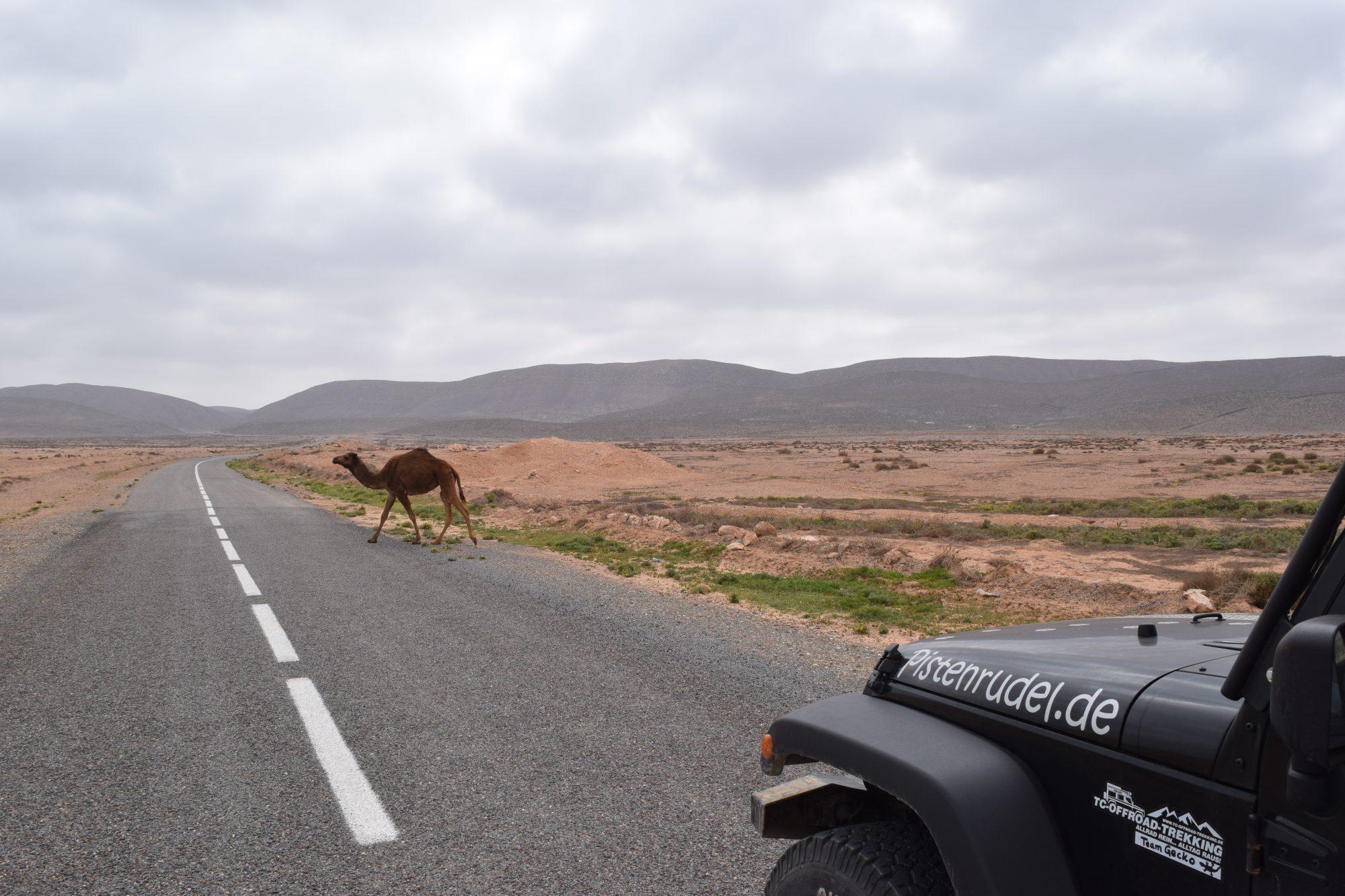2016 Marokko 1620