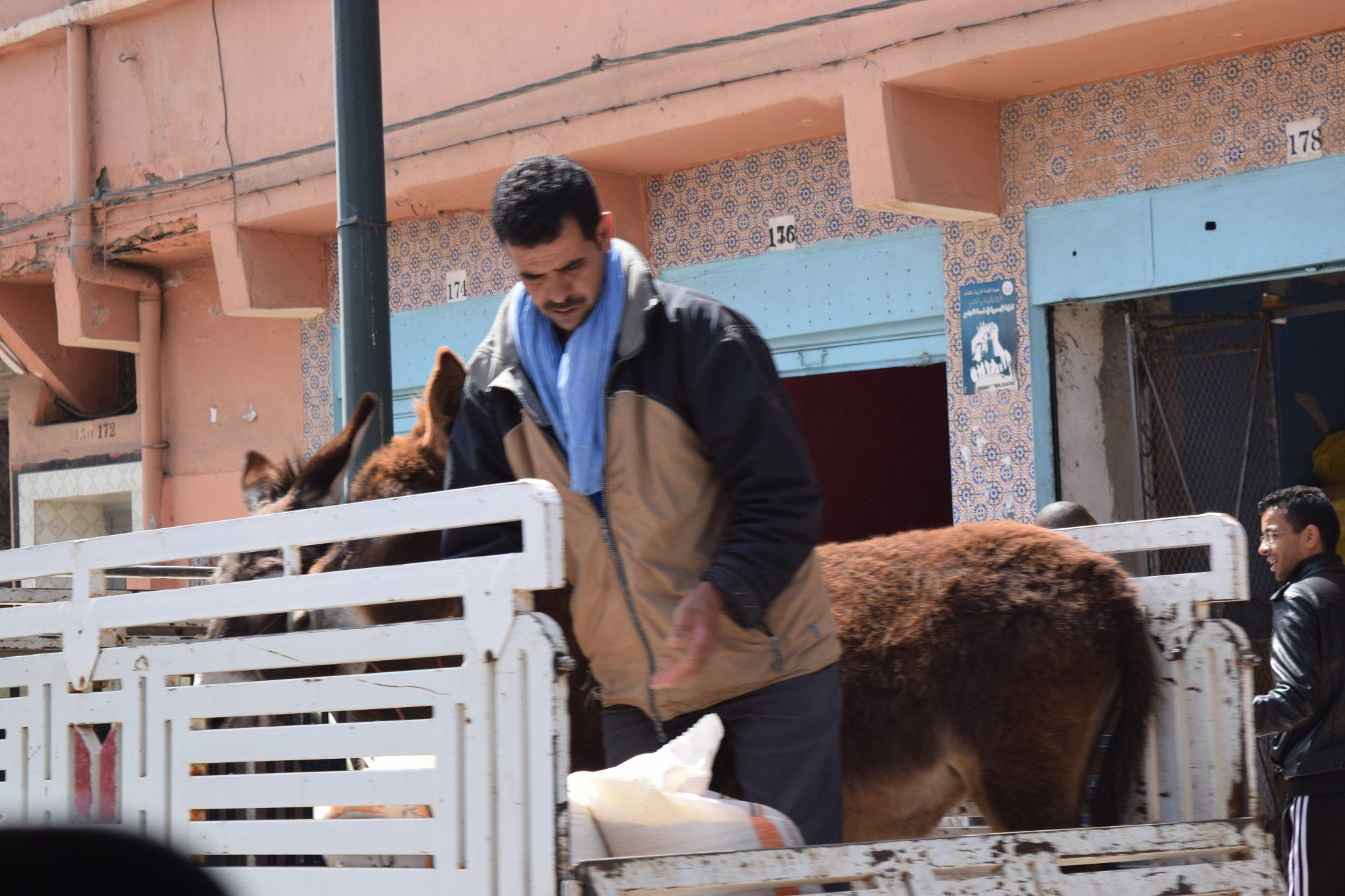 2016 Marokko 1626