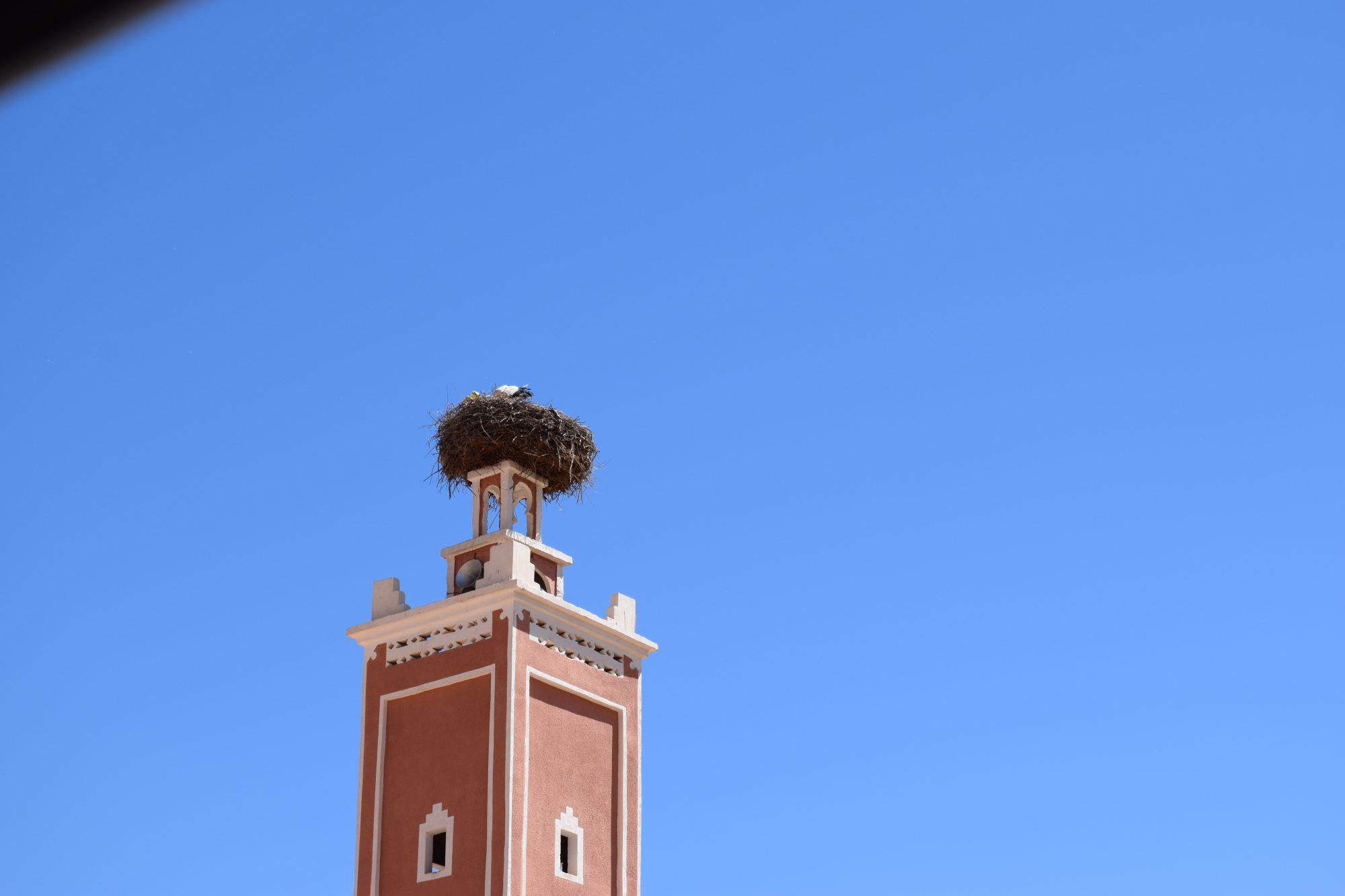 2016 Marokko 658